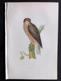 Morris 1897 Antique Hand Col Bird Print. Goshawk